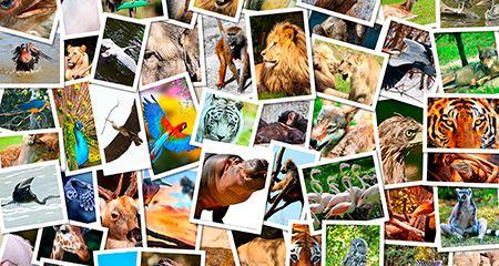 5 Животных, которые помогут укрепить здоровье