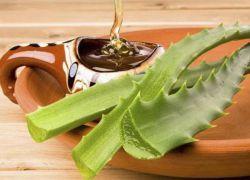 Алоэ с медом – рецепты для желудка