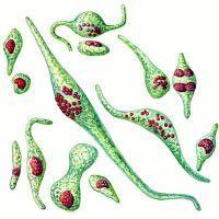 бактериален ендокардит