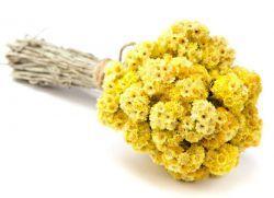 Helichrysum противопоказания