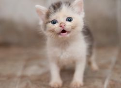 Чем кормить котенка, 1 месяц1