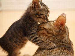 Чем кормить котенка 3 месяца1