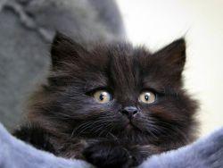 Чем кормить месячного котенка?