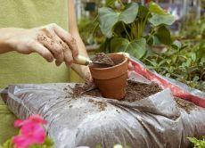 от изхранване на саксийни растения в дома
