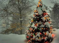 Чем украсить елку на улице своими руками