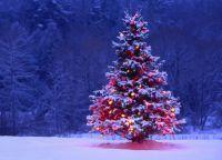 Чем украсить елку на улице своими руками7