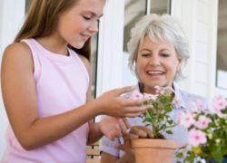 Какие цветы подарить бабушке