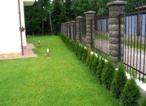 че растението заедно оградата 1