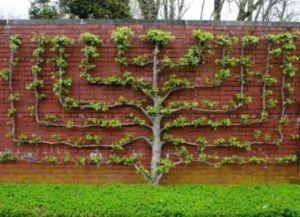 че растението заедно оградата 4