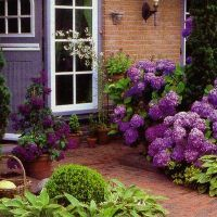 цъфтящи храсти за градината