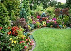 градина декоративни храсти