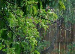 Дождь на троицу - приметы