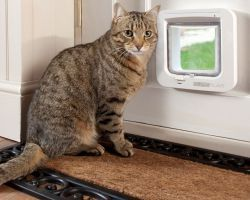 Дверца для кошек