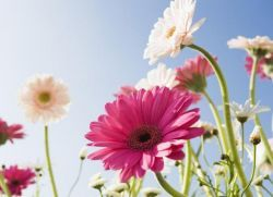 Гадание на цветках