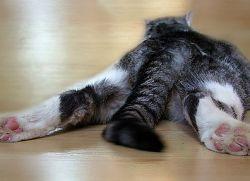У кошки глисты что делать