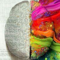 развитие правого полушария мозга