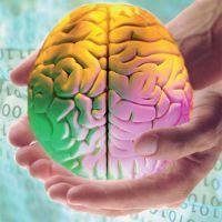 развите полушарий мозга