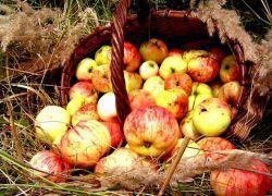 Яблочный спас - история праздника