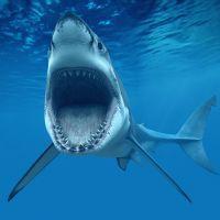 К чему снится акула?
