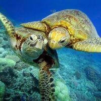 К чему снится черепаха?