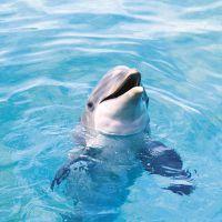 К чему снится дельфин женщине?