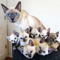 К чему снится кошка с котятами женщине?