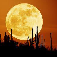 К чему снится луна?
