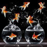 К чему снятся рыбы в воде?
