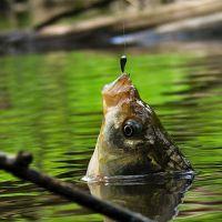 К чему снится поймать рыбу?