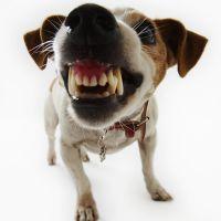 К чему снится злая собака?