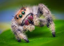 К чему снится укус паука?