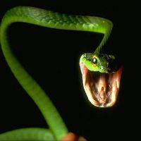 К чему снится укус змеи за ногу?
