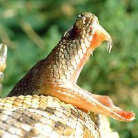 К чему снится укус змеи?