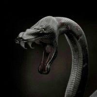 К чему снится змея мужчине?