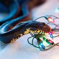 К чему снится змея в доме?