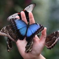 К чему снятся бабочки?