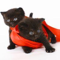 К чему снятся черные котята?