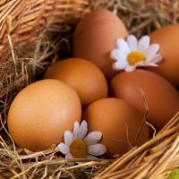 К чему снятся яйца?