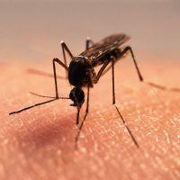 К чему снятся комары?