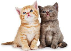 К чему снятся маленькие котята?