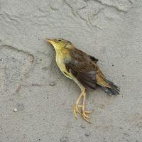 К чему снятся мертвые птицы?