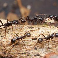 К чему снятся муравьи?