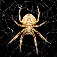 К чему снятся пауки и паутина?