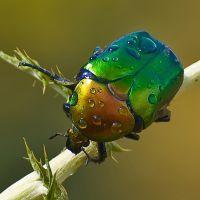 К чему снятся жуки?