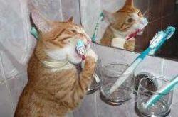 стоматологична котка грижи