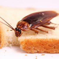 Как избавиться от тараканов навсегда – заговоры