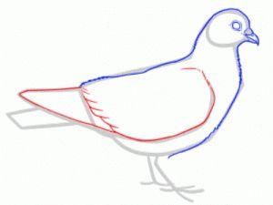 Как поэтапно нарисовать карандашом голубя детям 24