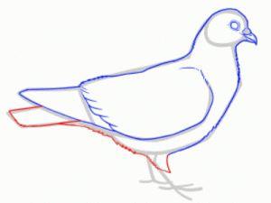 Как поэтапно нарисовать карандашом голубя детям 25