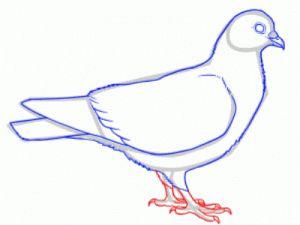 Как поэтапно нарисовать карандашом голубя детям 26