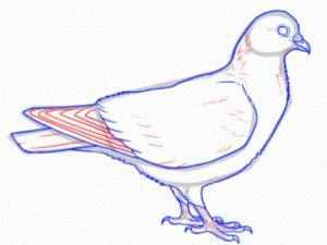 Как поэтапно нарисовать карандашом голубя детям 27
